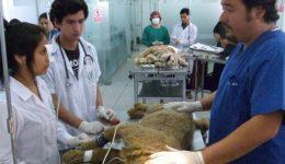 L'enseignement sans animaux